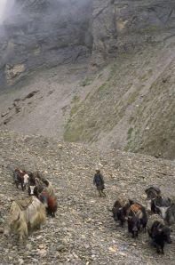 himalyan traders