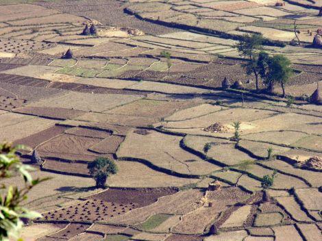 rise field-nepal-kavre